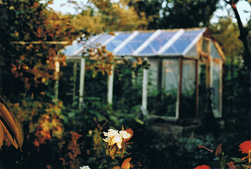 Roses and a greenhouse