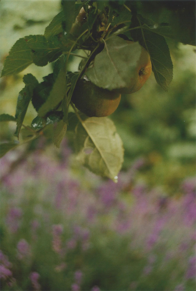 Pears and lavender