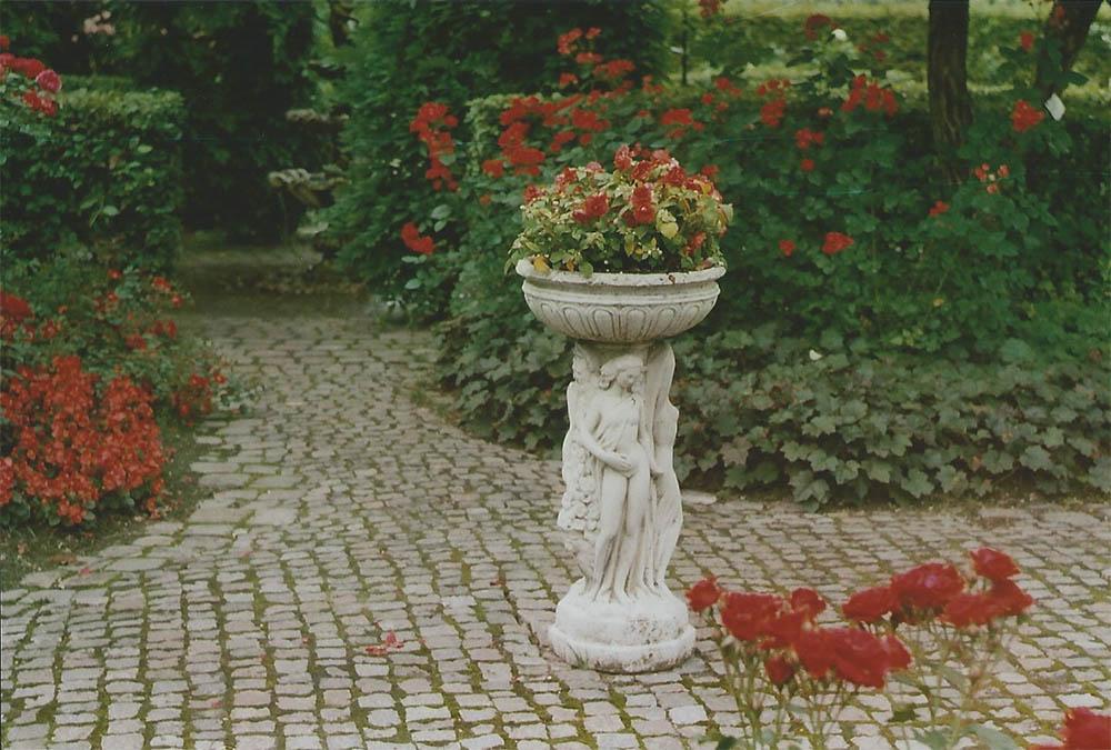 Roses in the Castle Arcen garden